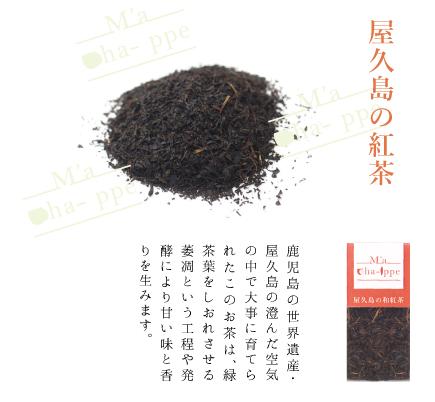 屋久島の紅茶